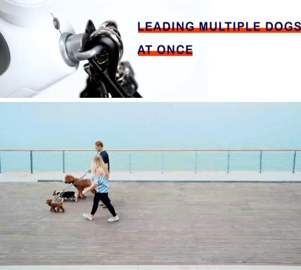 多功能遛狗神器,有了它就能愉快又安全地遛狗