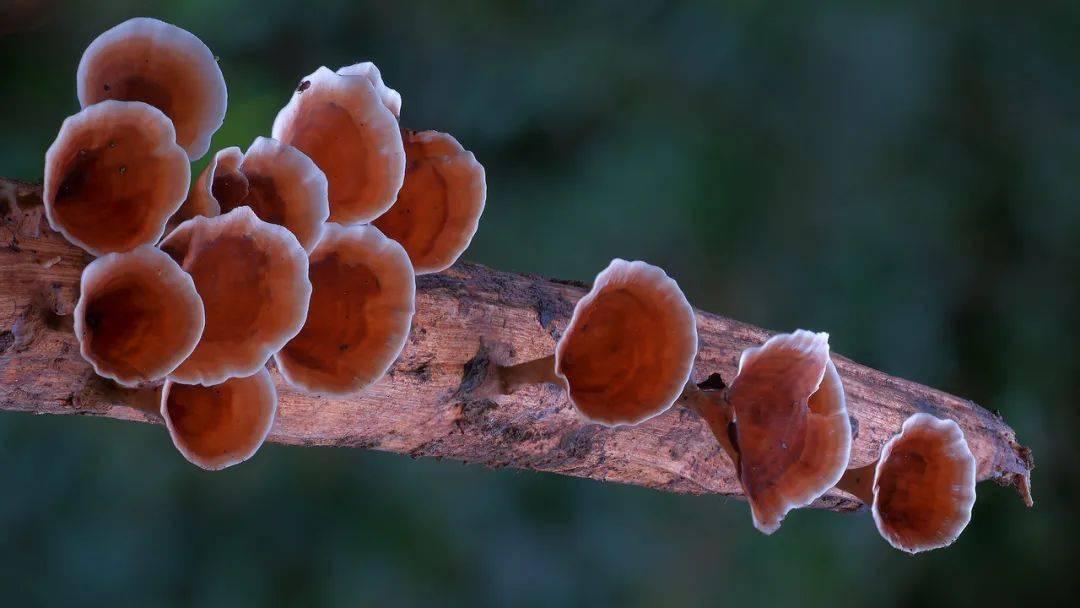 """8岁退休老人耗费10年时间只为了更好地拍摄蘑菇"""""""